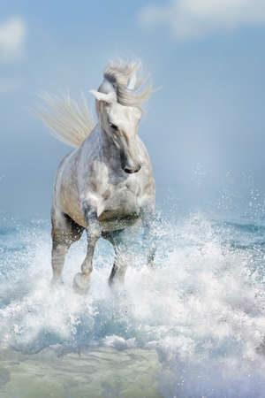 White horse run in ocean vawes
