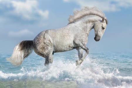 White horse run in oceaan vawes