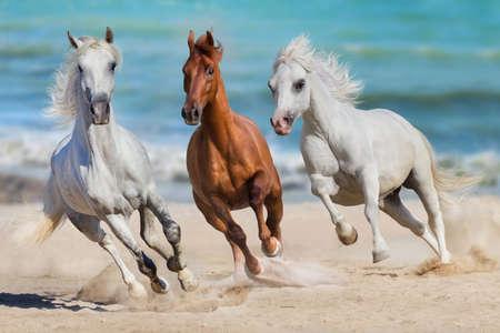 Horse herd run gallop on seashore 스톡 콘텐츠