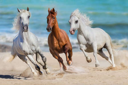 Horse herd run gallop on seashore Stock Photo