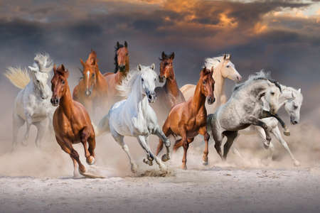 Horses run gallop in dust against sunset sky