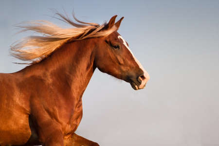Red horse with long mane portrait against sky Imagens