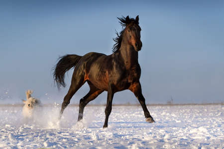 Funny horse on snow field against blue sky Stock Photo
