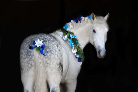White horse with christmas wreath isolated on black background Stock Photo