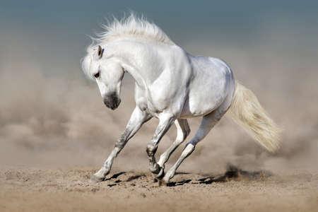 TAlon blanc courir dans le désert contre le ciel bleu Banque d'images - 99565758