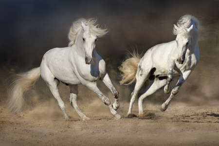 Cople horse in motion in the desert against a dramatic dark background
