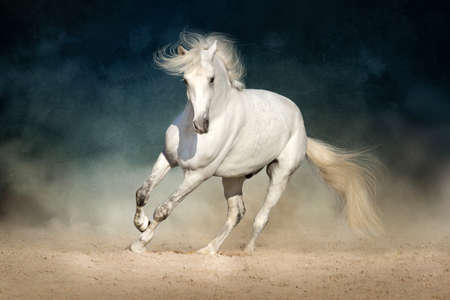 White horse run in dust on dark background