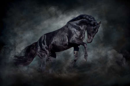Black stallion in motion against dark dust