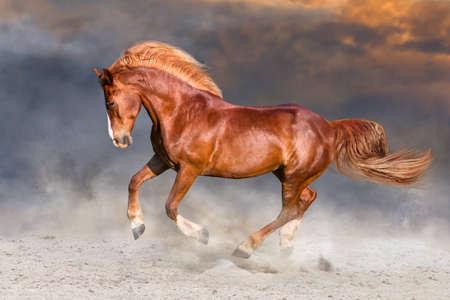 Rood paard met lange blonde manen die in het woestijnstof in werking worden gesteld Stockfoto