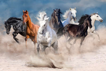 Horse herd run in desert dust storm Banque d'images