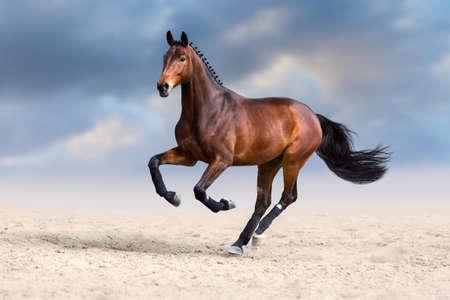 Bay horse run gallop in sand