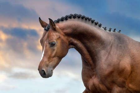 Bay stallion portrait against sunset sky