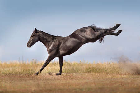 Horse play fun on pasture