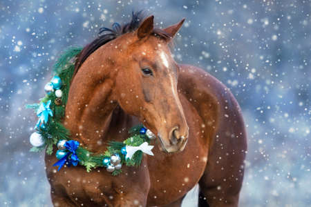 Red horse portrait in christmas decoration wreath Archivio Fotografico