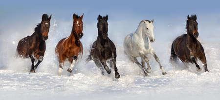Horse herd run fast in snow field