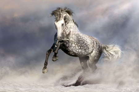White horse in sandy dust