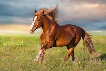 Red horse run in green meadow Stok Fotoğraf