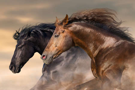 Two horse run free close up portrait Stock Photo