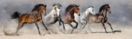 Horses run fast in the sand against the dramatic sky Reklamní fotografie