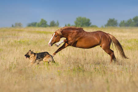Horse play with dog outdoor free 写真素材