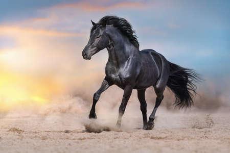 Schwarzer Hengst läuft auf Wüstenstaub vor dramatischem Hintergrund