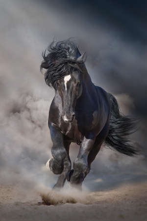 Black stallion run on desert dust against dramatic background