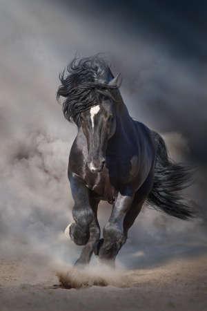 Zwarte hengst loopt op woestijnstof tegen dramatische achtergrond Stockfoto