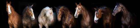 Portret grupy koni na czarnym tle na baner Zdjęcie Seryjne