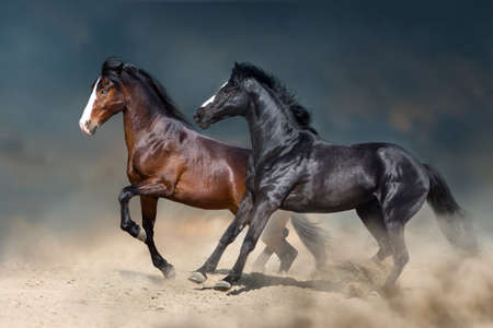 Two stallion run and play fun in desert dust Imagens