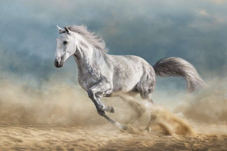 Grey horse galloping on sandy field against dramatic blue sky Imagens