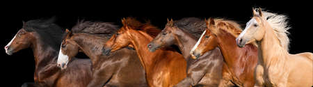 Horse herd run isolated on black background Imagens