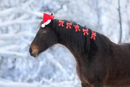 Bay horse portrait in santa red hat in snow winter day Stockfoto