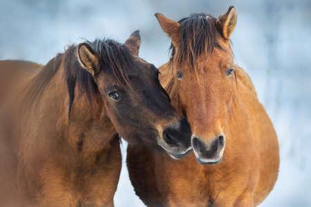 Horse herd in motion on winter snow landscape