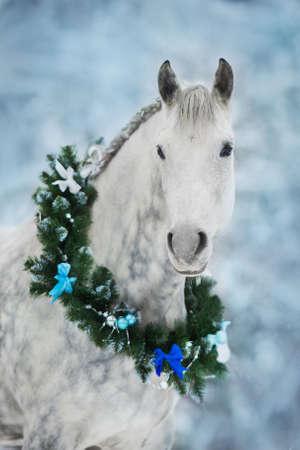 White horse with christmas wreath isolated on black background Stockfoto