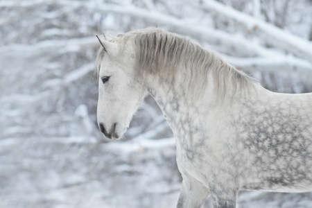 Grijs paardenportret op winterdag Stockfoto