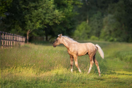 Cute foal on spring green pasture