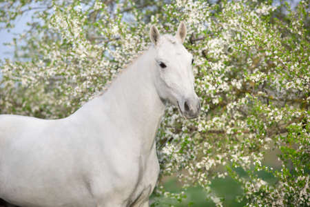 Horse in spring blossom garden Stockfoto - 138450886