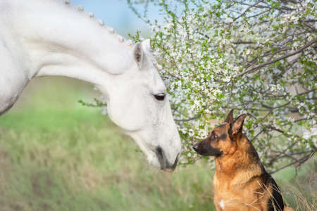 Horse and dog close up portrait