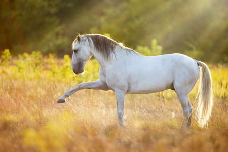 Horse standing in field at sunlight