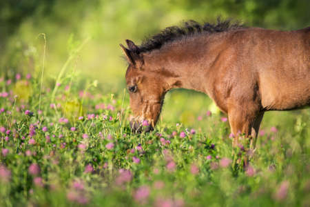 Horse close up portrait in flowers Stockfoto