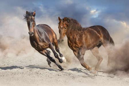 Two horse run free in desert dust Stockfoto - 142291382