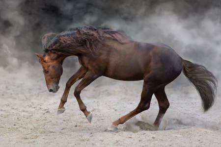 Red stallion with long mane run fast against dramatic sky in dust Stockfoto - 142291532