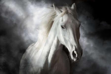 White horse portrait in motion isolated on black Foto de archivo