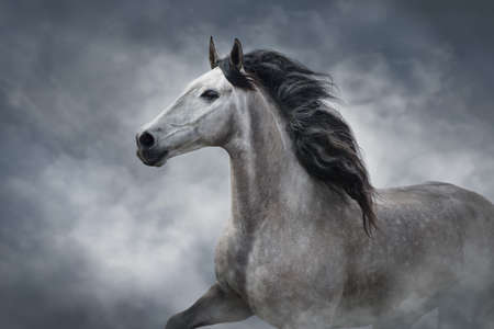 White andalusian horse portrait in motion isolated on dark background Stockfoto - 142295462