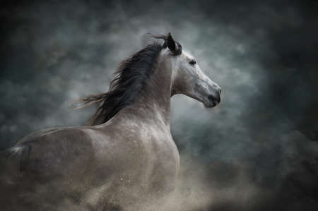 White andalusian horse portrait in motion isolated on dark background