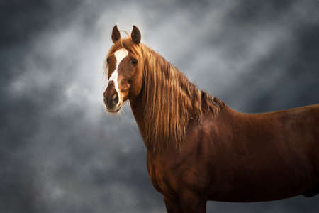 Red horse with long mane on dark background Stockfoto