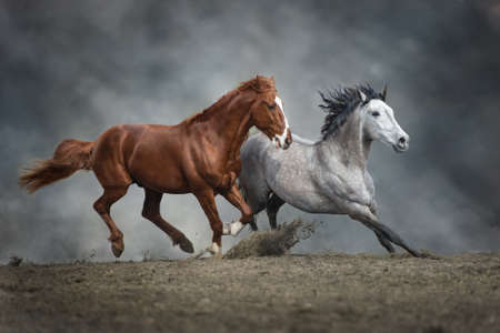 Two horse run free in desert dust Stockfoto - 142301613