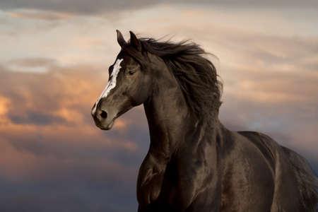 Black horse portrait against blue sky Imagens