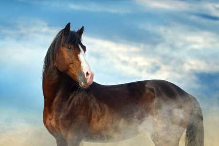 Bay horse portrait against blue sky Imagens