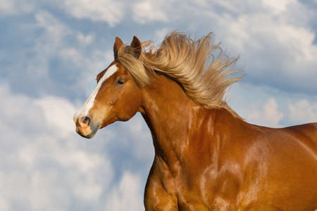 Red horse with long mane portrait against blue sky